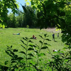 corso sulle erbe spontanee